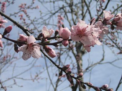 2010春柿島 007