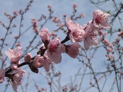 2010春柿島 008