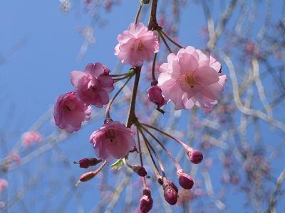 2010春柿島 016