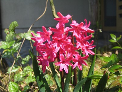2010春柿島 014