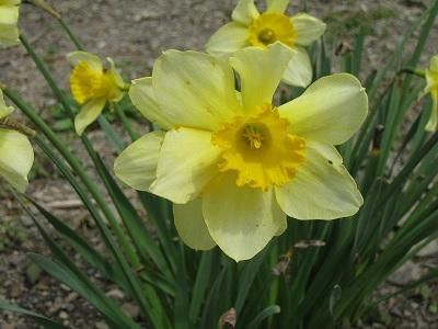 2010春柿島 020