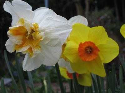 2010春柿島 023