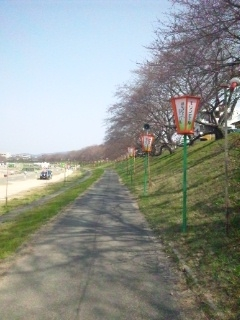 120402 旭川 さくらカーニバル 蕾②