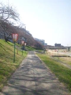 120402 旭川 さくらカーニバル 蕾③