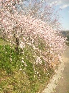 120404 津山 神代梅の里公園③