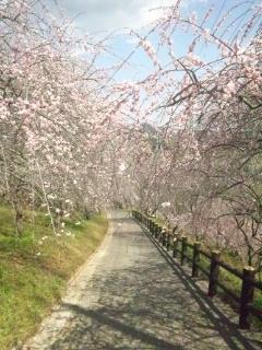 120404 津山 神代梅の里公園④