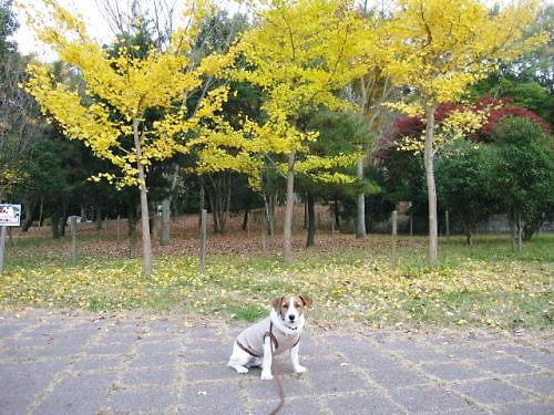 9長岡公園802