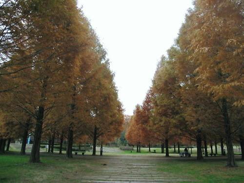 9長岡公園862