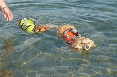 泳げるかな?