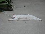 2008夏 大分(猫)