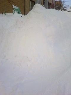 22.1.17大雪の庭