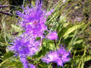 六花の森12
