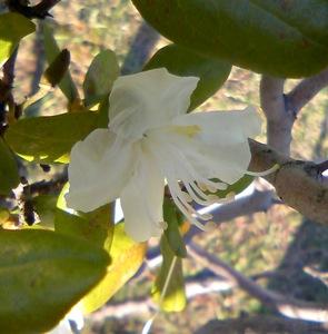 狂い咲き白