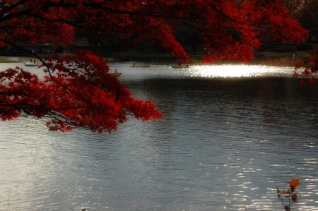 水鳥の池1
