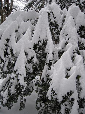 冬の上高地 119