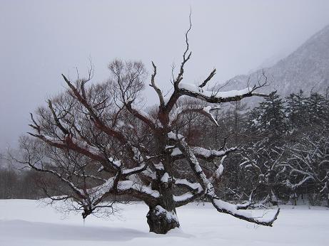 冬の上高地 126