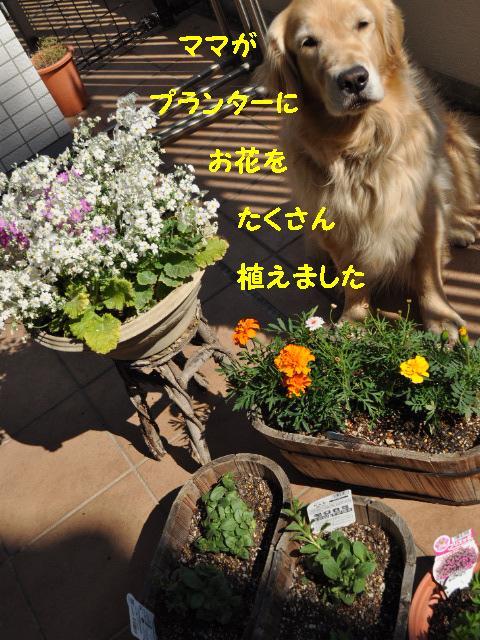 110406 お花