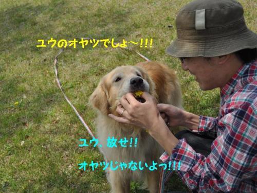 2011年5月G.W+007_convert_20110506192029
