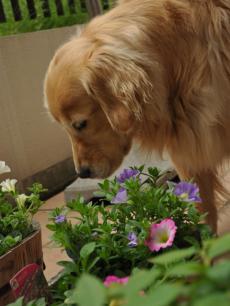 2011年5月7日雨のち曇り+015_convert_20110507161646