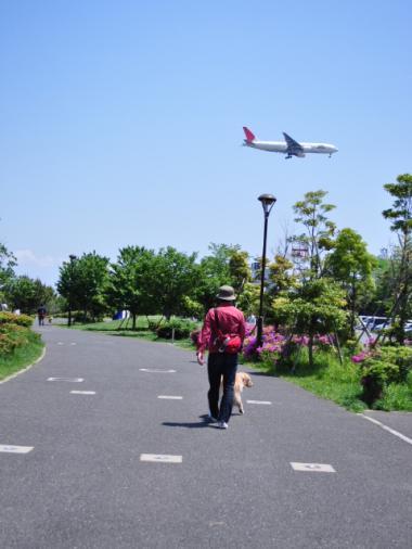 5月8日 城南島海浜公園+004_convert_20110509133930