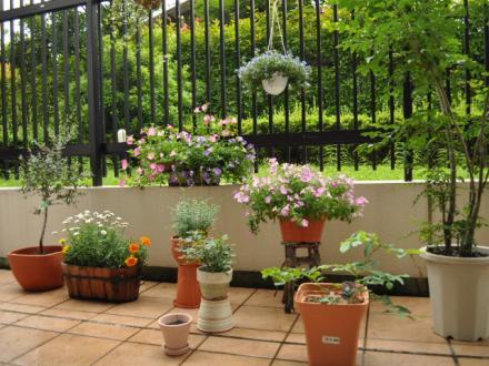 6月18日テラスの花々+(9)_convert_20110620221717