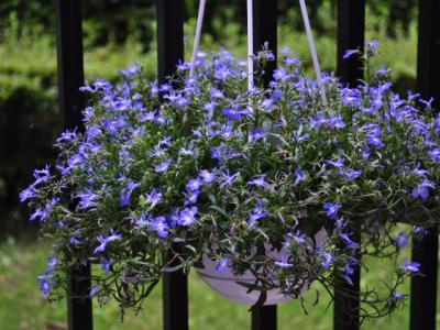 6月18日テラスの花々+(6)_convert_20110620221847
