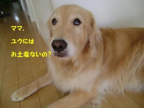 1_convert_20110703133020