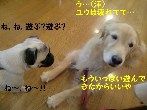 那須高原ペンションみなみかぜ+(9)_convert_20111001072147