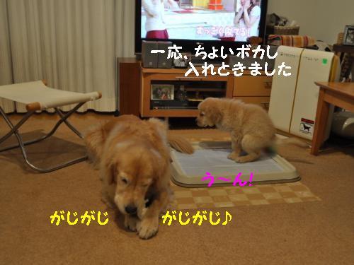 ユウ&とわ(2ヶ月10日)+056_convert_20111117000753