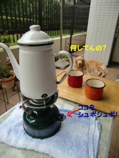 CIMG6864_convert_20110820214210.jpg