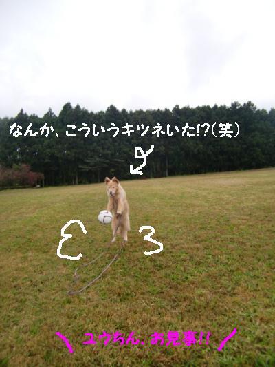 CIMG7076_convert_20111107144202.jpg