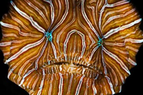 Newfrogfish