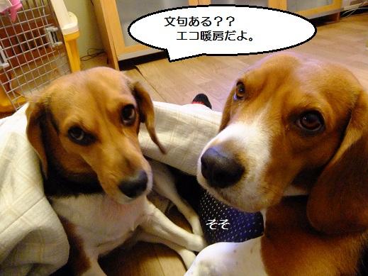 052_20101205025228.jpg