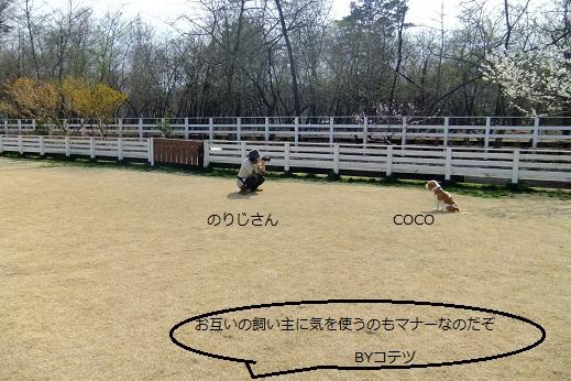 345_20100406070103.jpg