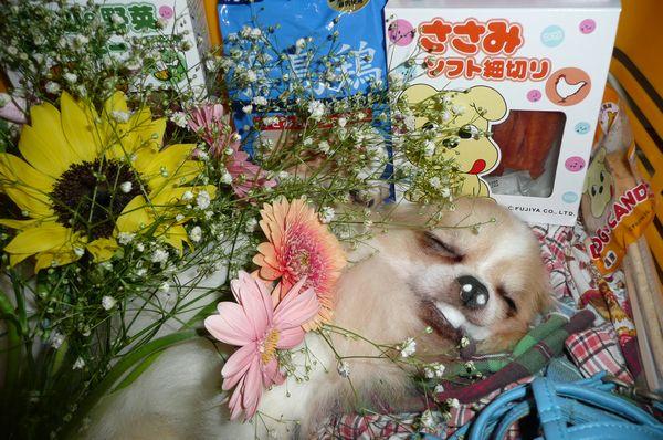 b1_20100621013227.jpg