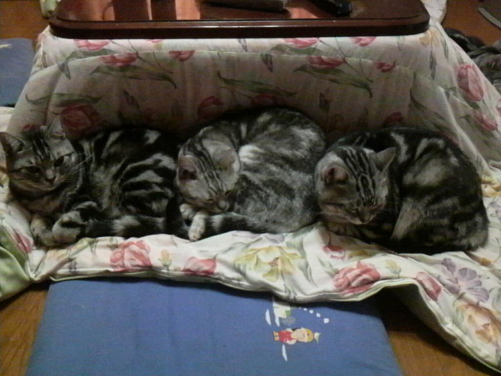 '09/11/27 猫はコタツに集まるの巻