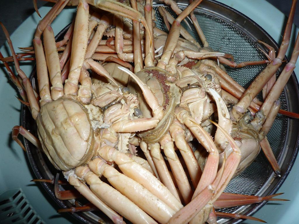 '09 セコガニの茹でガニ