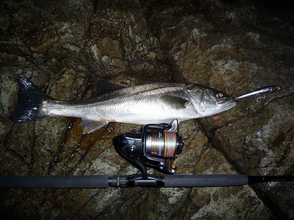 2009/12/30 磯マル68cm 2.5kg