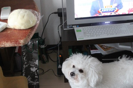 メロンパンと犬 (5)