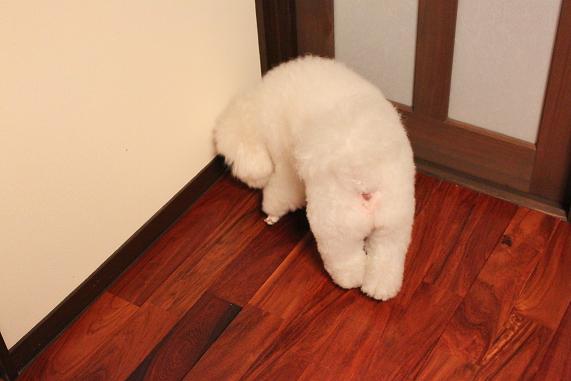 彷徨う犬。 (2)