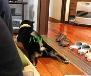 犬がいる光景 (5)