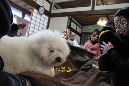 犬がいる光景 (3)