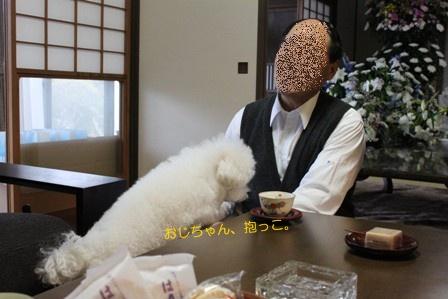 犬がいる光景 (2)