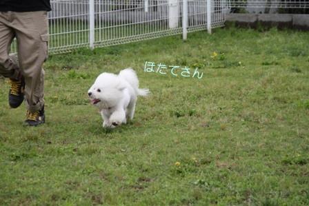 モフリーゼ会@毛呂山 ラン編 (3)