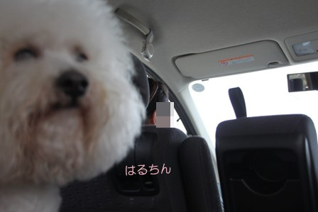 モフリーゼ会@毛呂山 おみや編 (3)