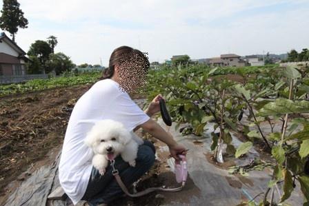 野菜収穫 (3)