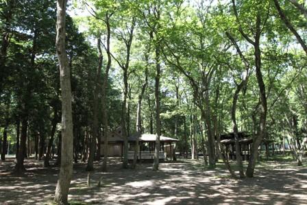 近場キャンプ (11)