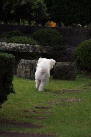 庭遊び (6)