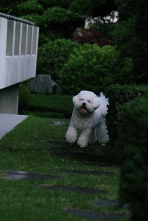 庭遊び (3)