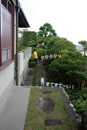 庭遊び (7)